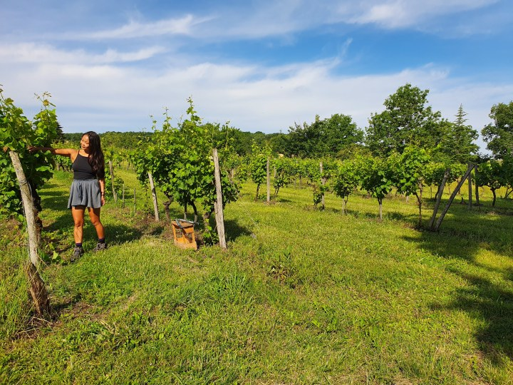 22 June 2019 – How I ended up working on a vineyard in France